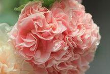высокорослые цветы / Высокорослые садовые цветы служат для оформления заднего плана клумб.