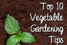 Gardening Tips / by Martine Chatelier