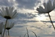 I D inspirée / mes images qui fixent la beauté...
