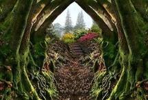 -Pathways-