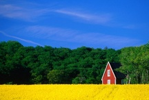 Sweden / by Maud Ledhagen-Gazal