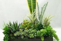 | Plantas |