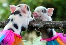 cute babies!  / by Amy Walker Carl