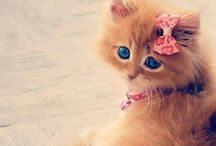 Cute! / kittens, cats, lolcats, anything else that's cute, but mainly cats!