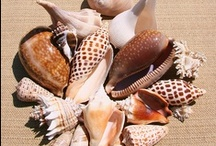 Seashells! / What to do with a million shells / by Susan Curran