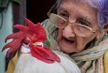 Hens & quail / by Lena Wennberg