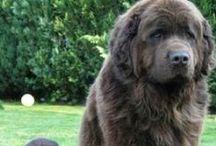 Dogs / L'amore che ti regalano gli animali è quello vero, soprattutto i cani.