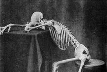 Skulls and Skeletons / by Gayle Ellison-Davis