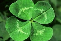 Luck of the Irish / Celebrating St. Patrick's Day / by Anita Self