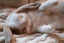 Baunilha / Our bunny Vanilla (Baunilha)