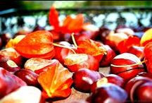 Golden Autumn / Colored leaves, chestnuts, pumpkins, long walks in the wood, delicious food and good wines - We love the colorful season!