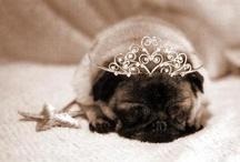 Oh Pugs!