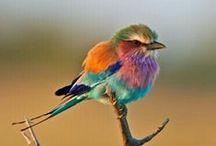 regenboog / afbeeldingen