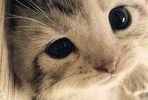 Cute Animals / Aww! Isn't this the cutest...
