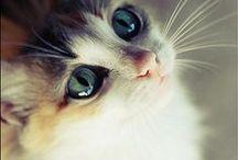 I LOVE CATS / ganz viele süße und lustige Katzen