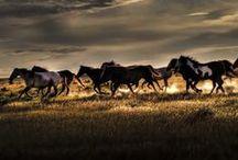 Horses, Cavalli / Il più maestoso degli animali. The most majestic animals.
