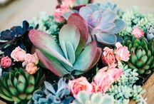 Plants Are People Too / Pretty self-explanatory