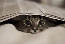 Pet Purrr~fect / by Debbie Huggins