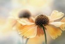 Flower Favorites and plants / I do so love flowers! / by Debbie Huggins