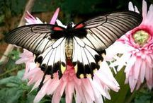 >;<   Butterflies, Bugs & More >;< / Things I love to find in my garden! / by Debbie Huggins