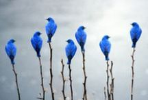 birds, ducks ...