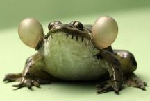 What's not to like about frogs, lizards and more interesting things! / by Debbie Huggins