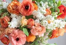 ♡ Picked, cut or potted flowers & plants ♡ those too! / by Debbie Huggins