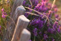 07.Purple Gardens
