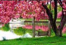 05.Pink Gardens