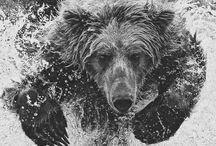 Sic'em Bears / that good ol' Baylor line / by Rylie York