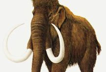 Extinct & Endangered animals