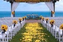 Matrimonio in giallo / Paletta