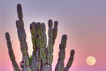 Cacti & succulent plants / Follow me if you like it! :)