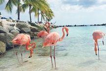 Flamingos - Lovely birds on stalk legs :) / Follow me if you like it! :)