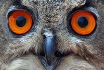 owls / by Paulette Van De North