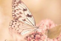 Butterfly inspo
