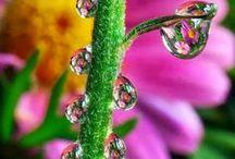 Water drops inspo
