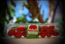 """SAMOS POPS"" snack tomato / New Family Member of Hellenic Greenhouses SA"