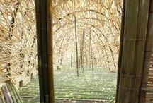 Bamboo / #bamboo