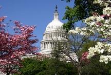 Seasons In Washington DC