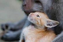 Ungewöhnliche Freundschaften / Wir wünschen uns eine Welt, in der wir mit allen Lebewesen friedlich zusammen leben können. Eine Welt, in der wir sie nicht mehr für ihr Fleisch, ihre Haut, ihre Milch oder Eier oder für unsere Unterhaltung ausbeuten und umbringen. Lasst uns in Freundschaft und Achtung mit den anderen Lebewesen auf diesem Planten zusammenleben. Denn jedes empfindungsfähige Lebewesen verdient die Berücksichtigung seiner Interessen. www.animalequality.de/speziesismus