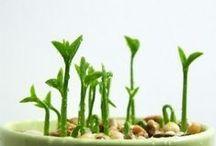 Gardening Lovers / ( gardening  ) idea_diy_tips