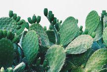 [plant.s]
