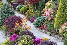 Gardens, plants and herbs / Jardins, plantas, ervas