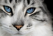 Cats: I love all of then, the big and the small! / Only for the felines