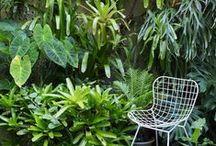 Garden & Outdoors / by Anjali Homewares
