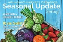 AHO Digital Magazine- Seasonal Update