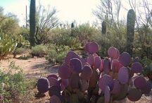 Quartzsite, AZ.  Home for the winter!! / by Sonia Makula