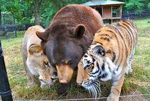 Animales que me encantan