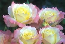 Inspirational flora